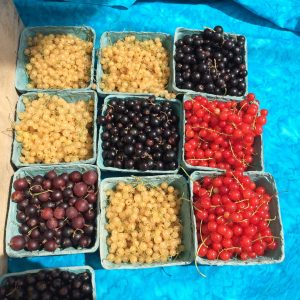 Organic Fruit and Berry CSA